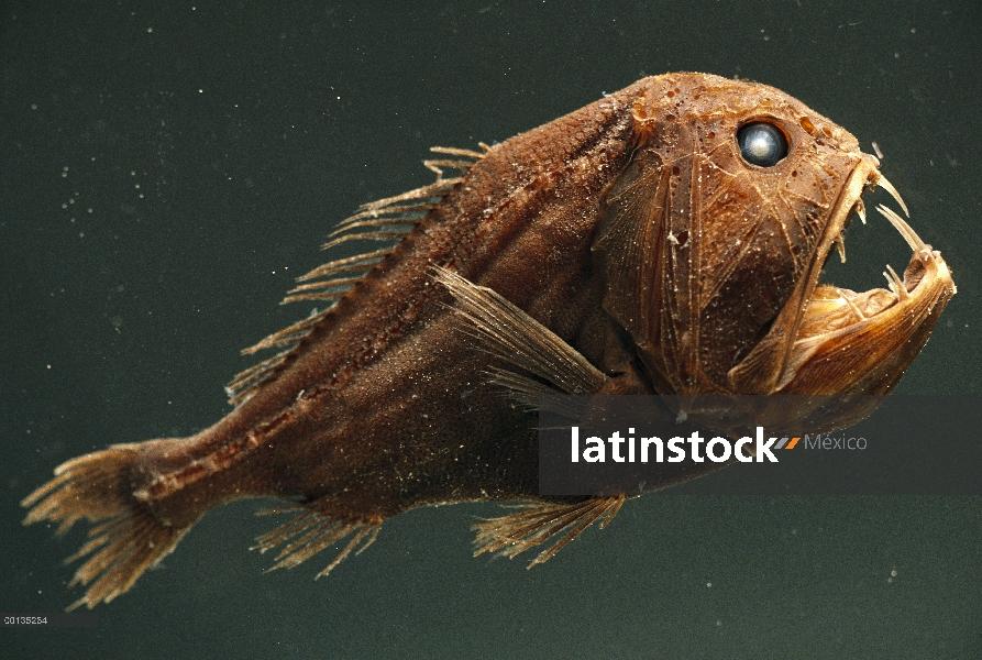 Latinstock Mexico